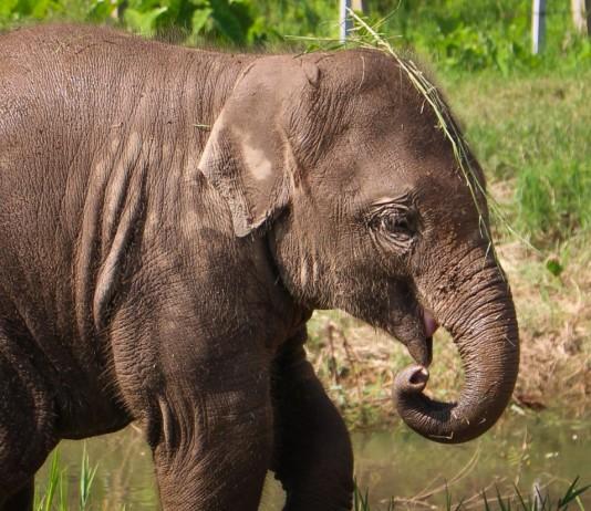 Baby elephant at ENP