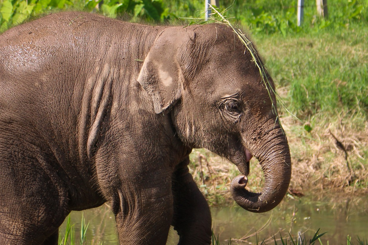 Baby elephant at ENP