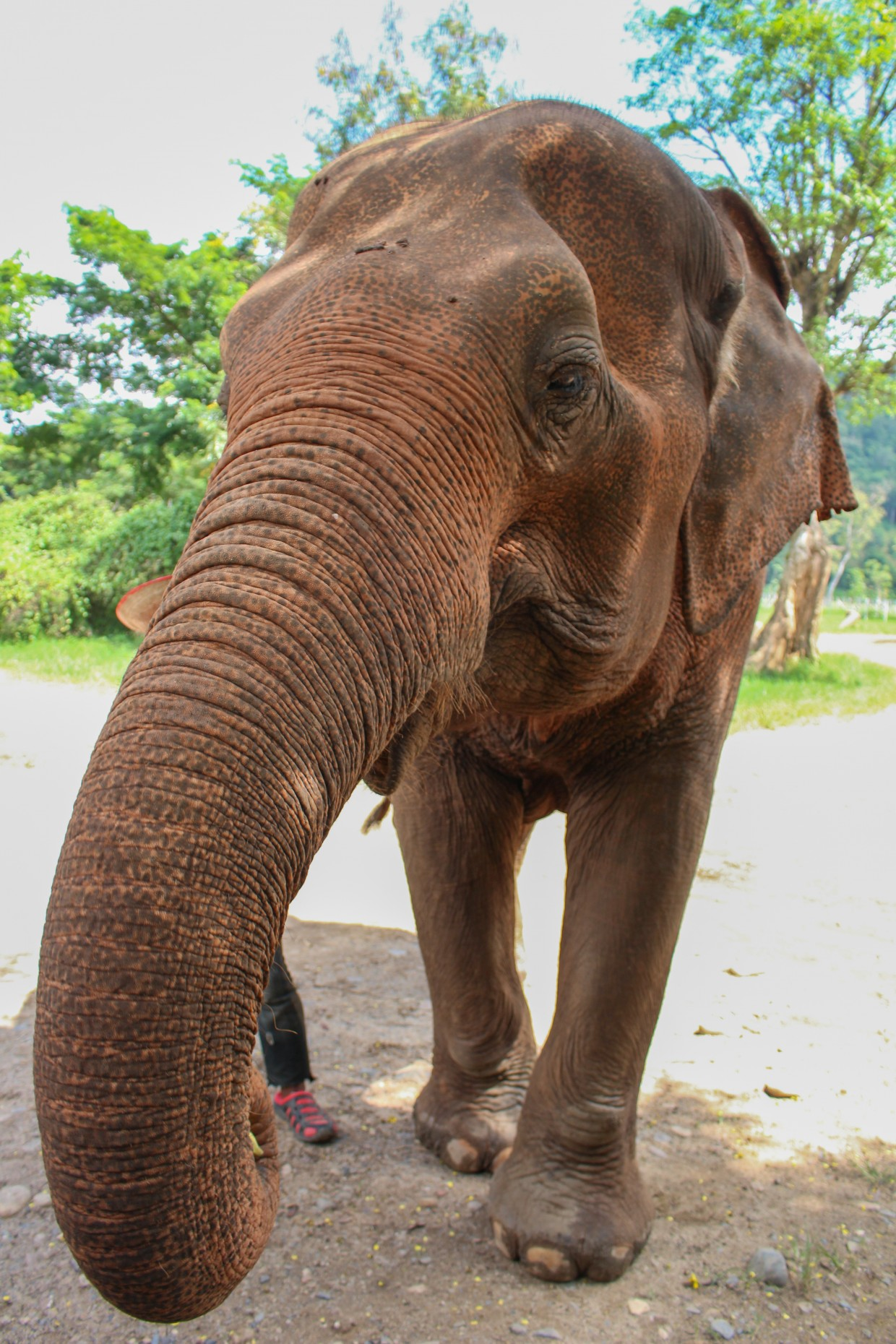Elephant at the Elephant Nature Park