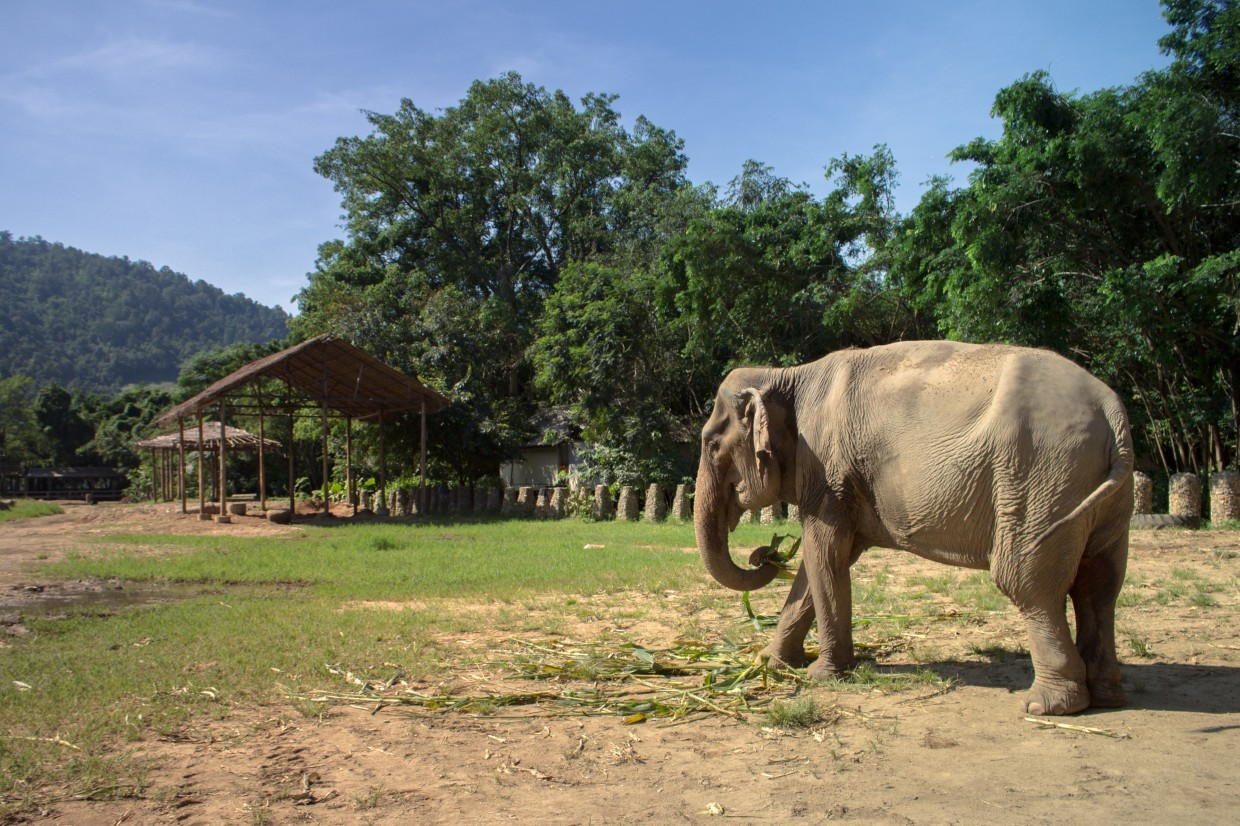 Elephant eating at ENP