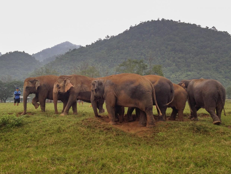 Elephant herd at Elephant Nature Park