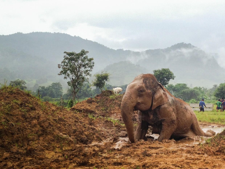 Essay elephant