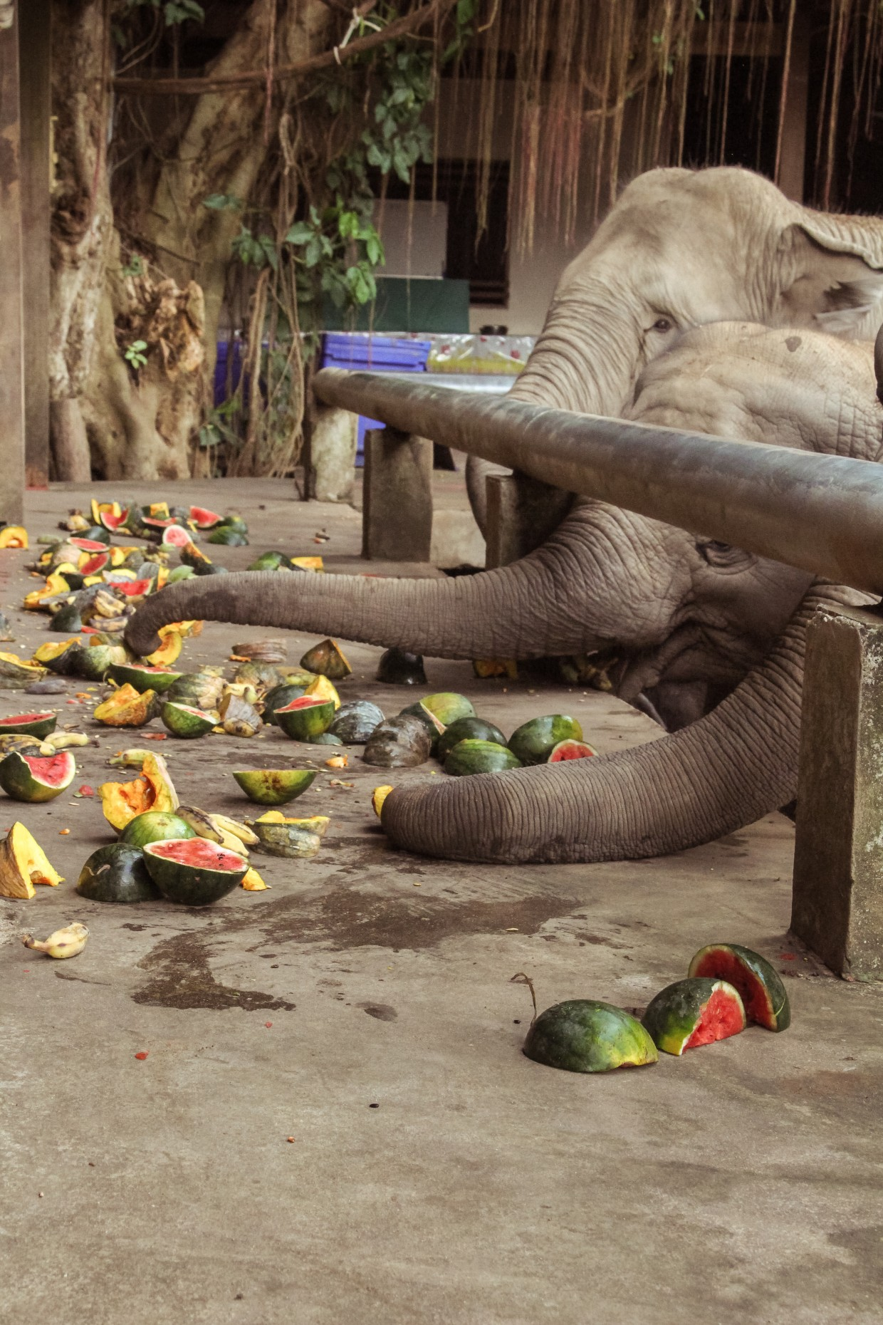 Elephants eating their lunch
