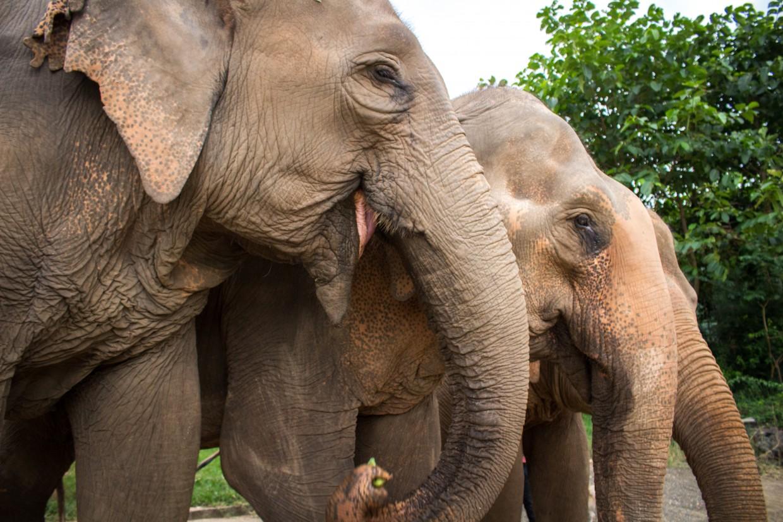 Line of elephants at ENP