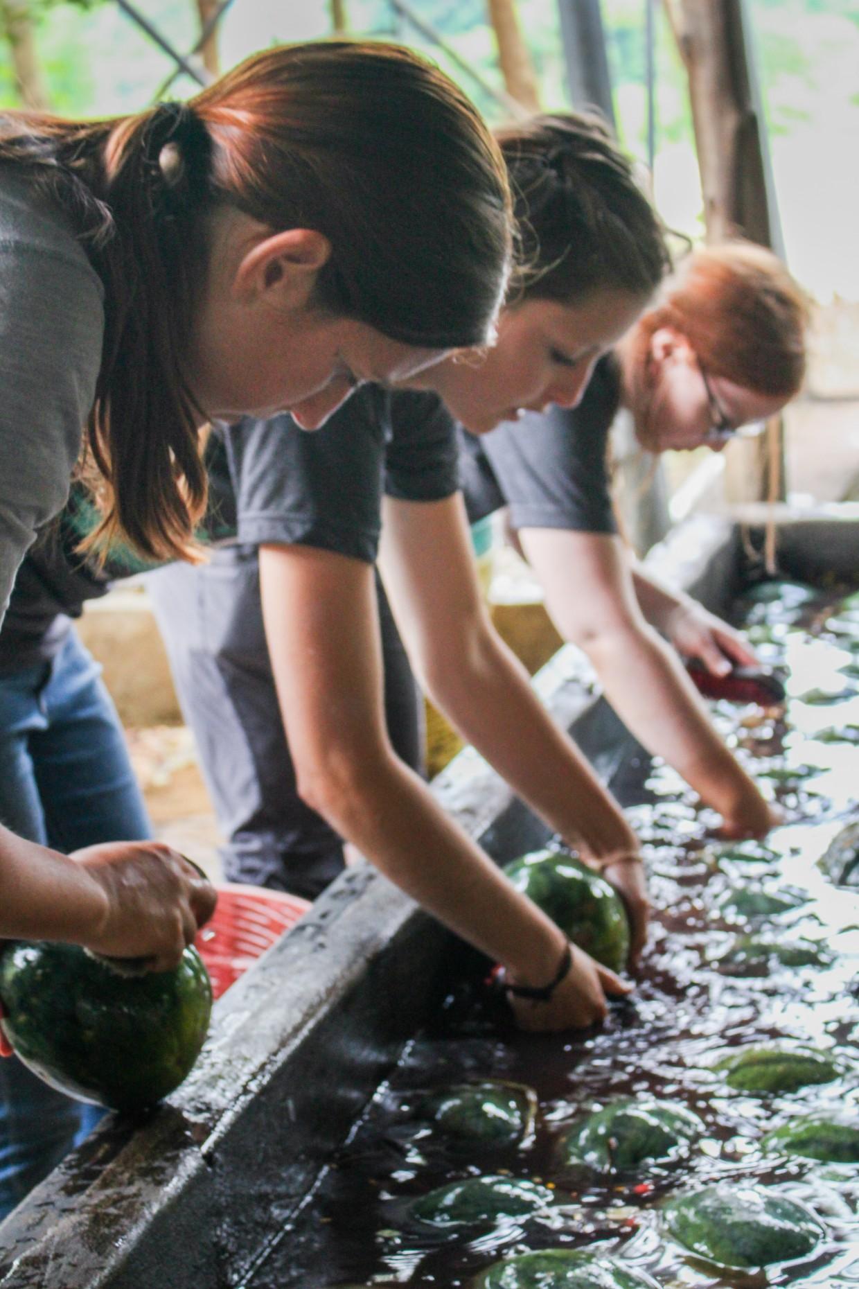 Volunteers washing pumpkins at ENP