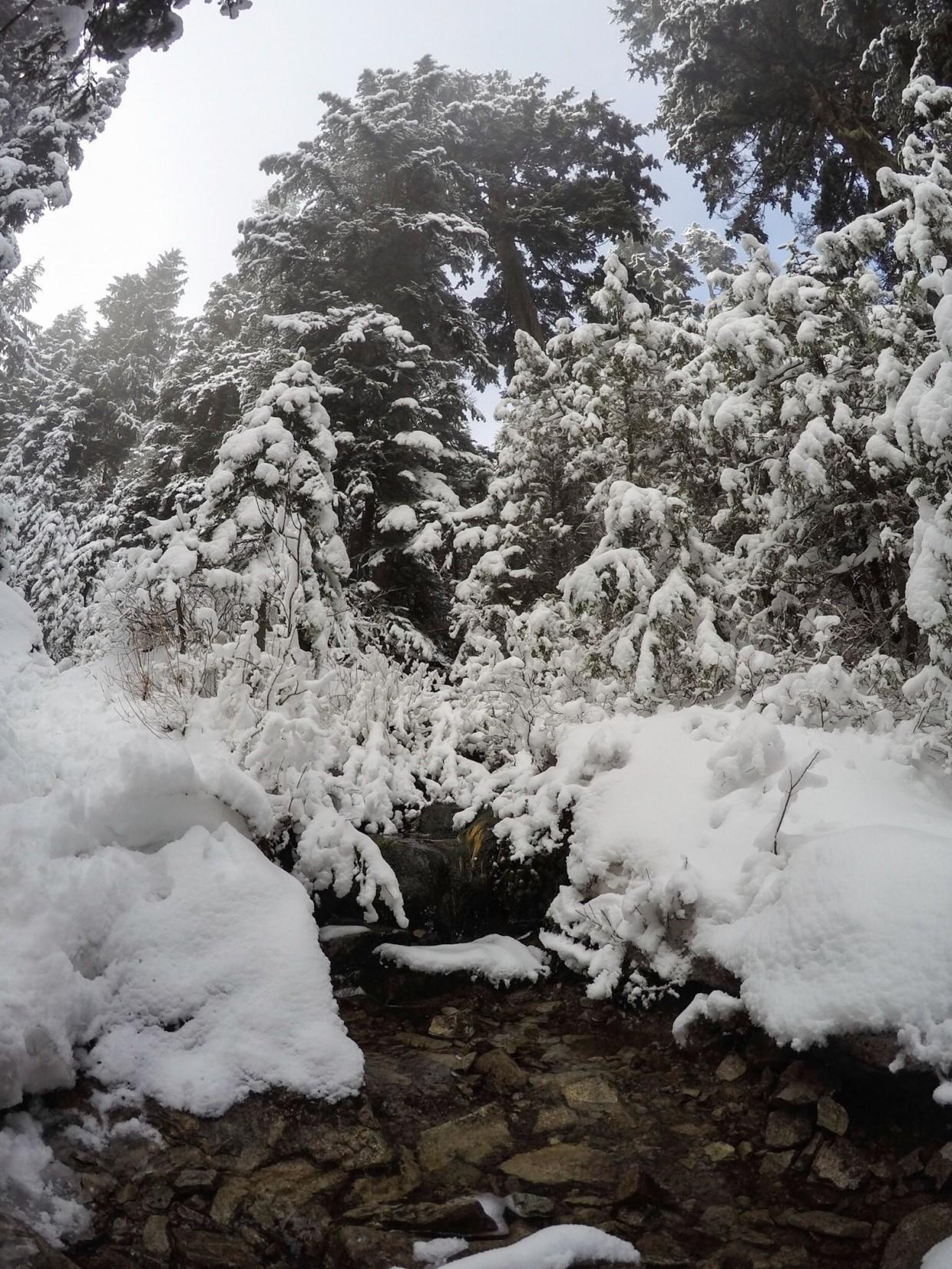 Little stream on Grouse Mountain