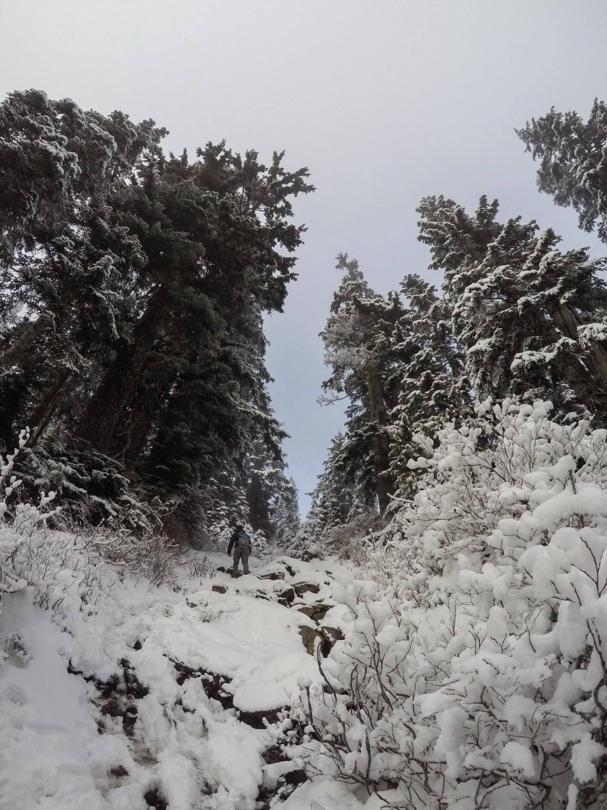 Grouse Mountain, Canada