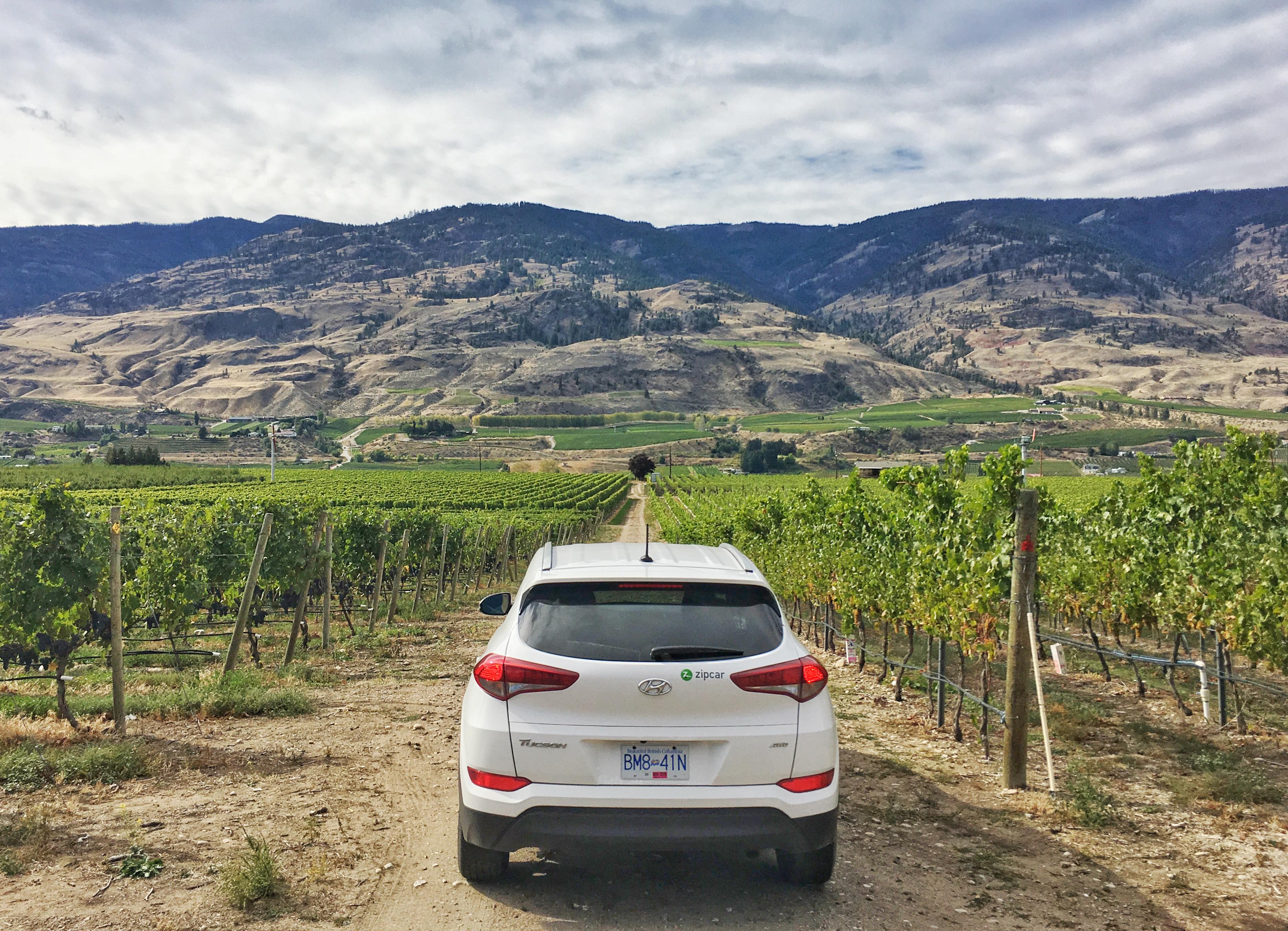 Driving through vineyards