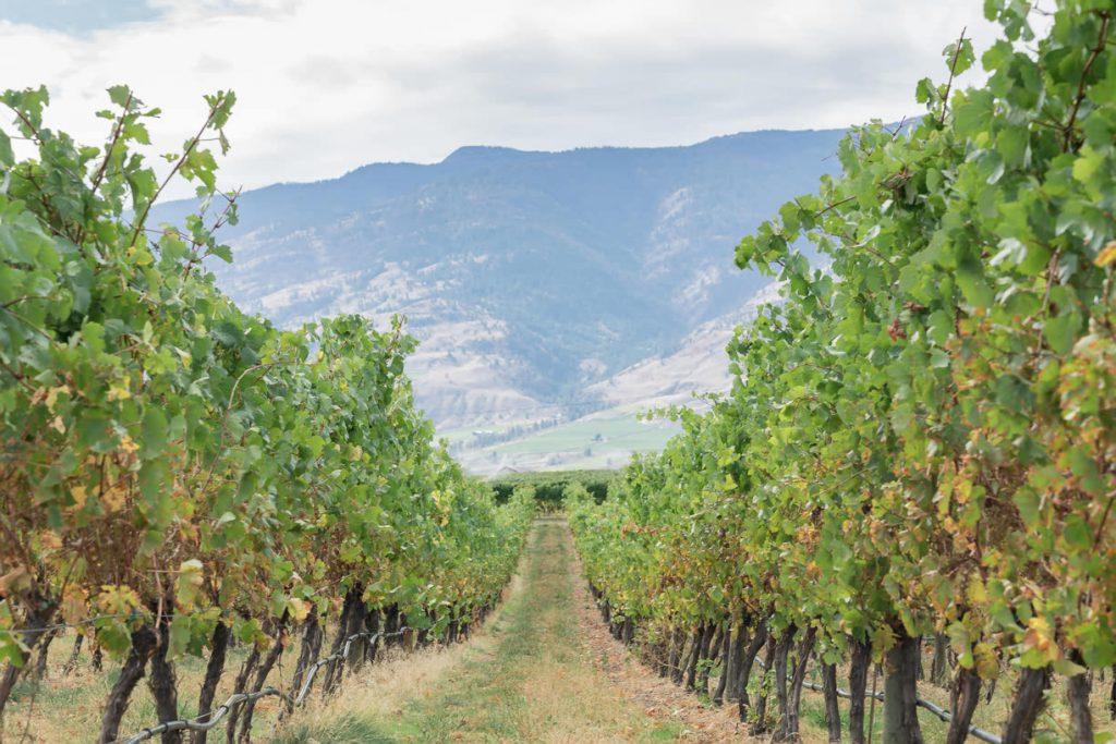 Wine tasting in Osoyoos wineries