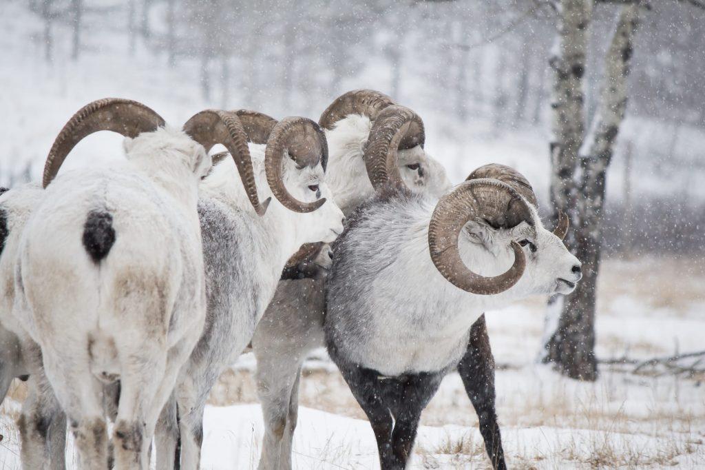 Meet the Animals From the Yukon Wildlife Preserve