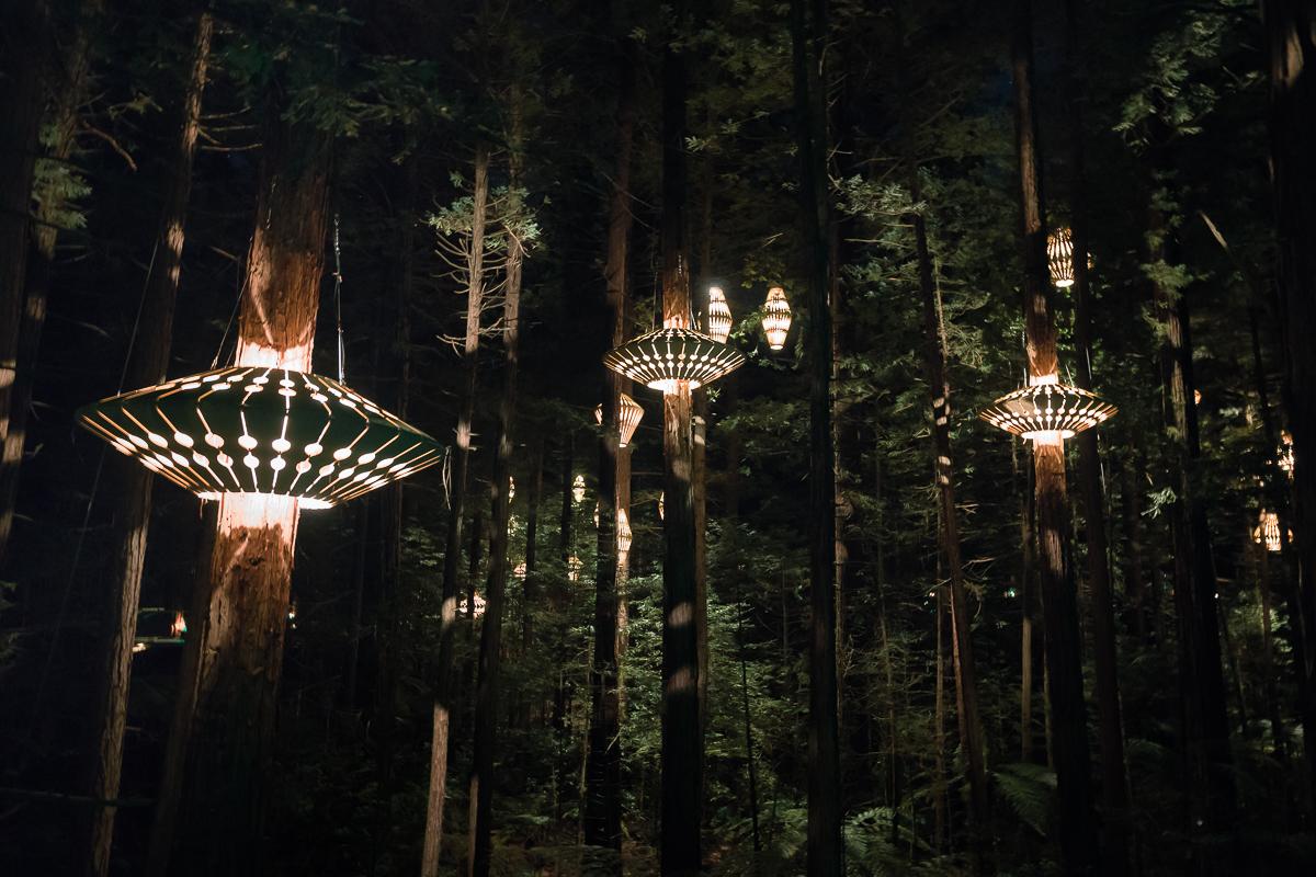 Night Lights Redwoods Rotorua