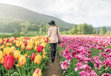 Bloom Tulip Festival Abbotsford