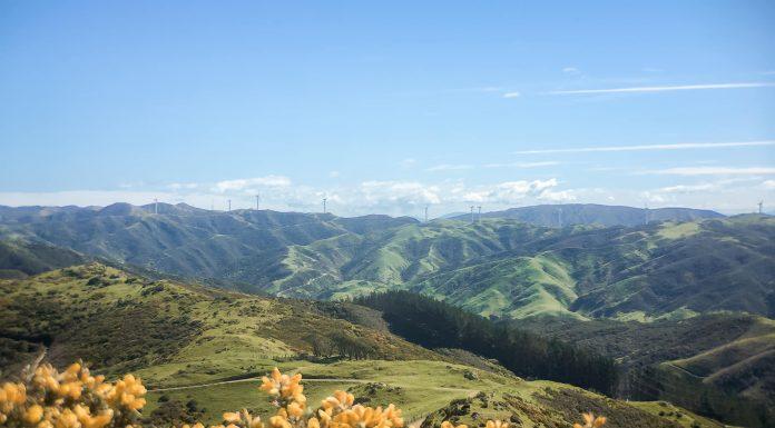 The hills in Wellington