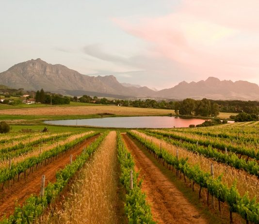 Middelvlei landscape - Stellenbosch Wine Routes