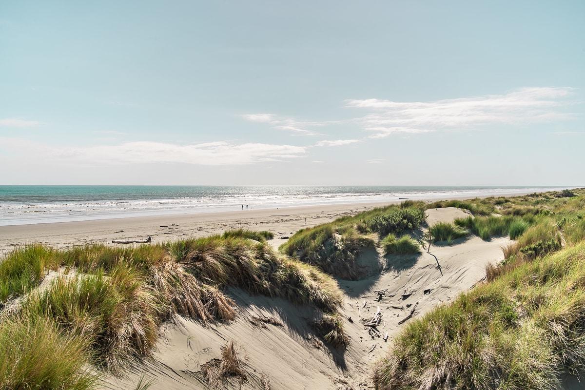 New Zealand Beach Dune