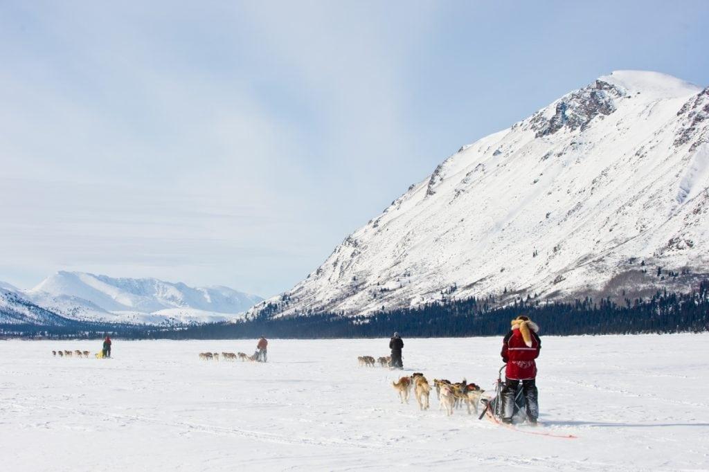 dog sledding on Annie Lake; Yukon