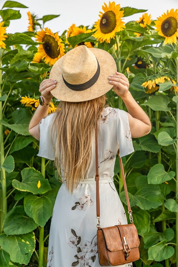 Looking at sunflowers