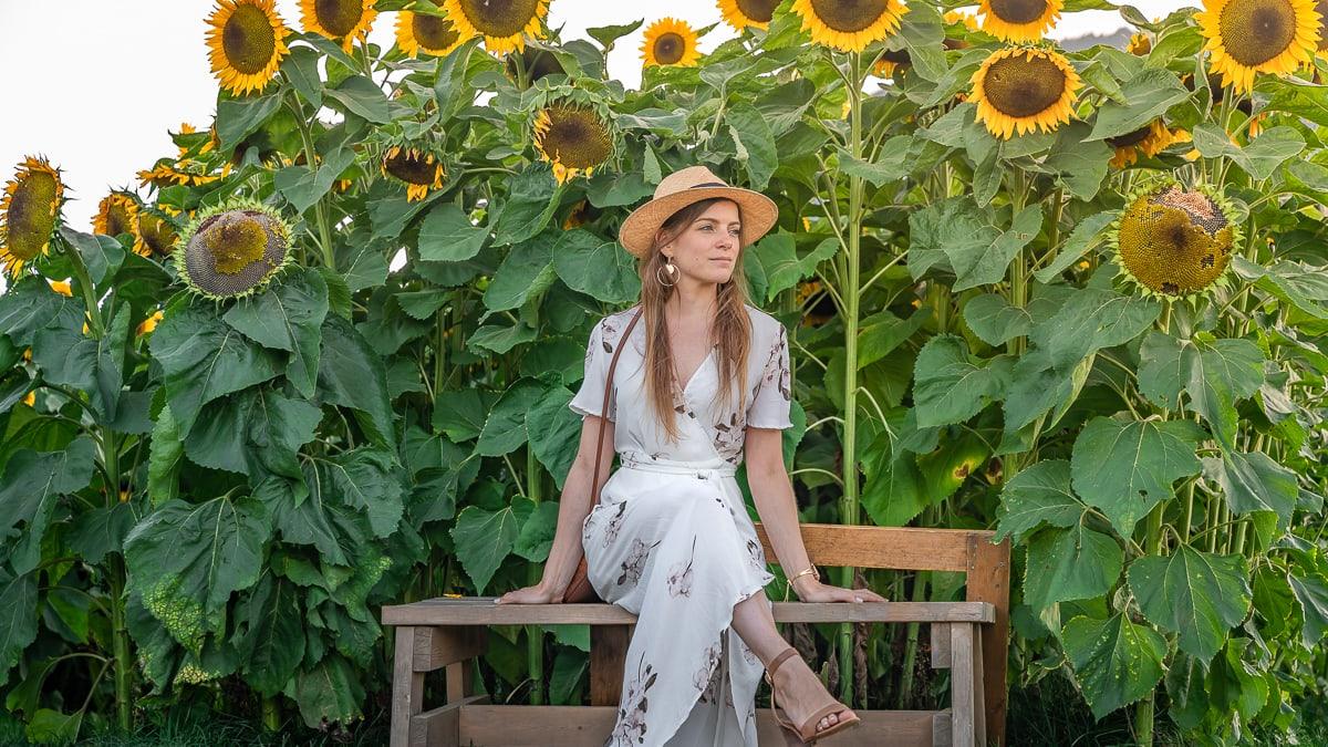 Sitting in Sunflower Field Canada