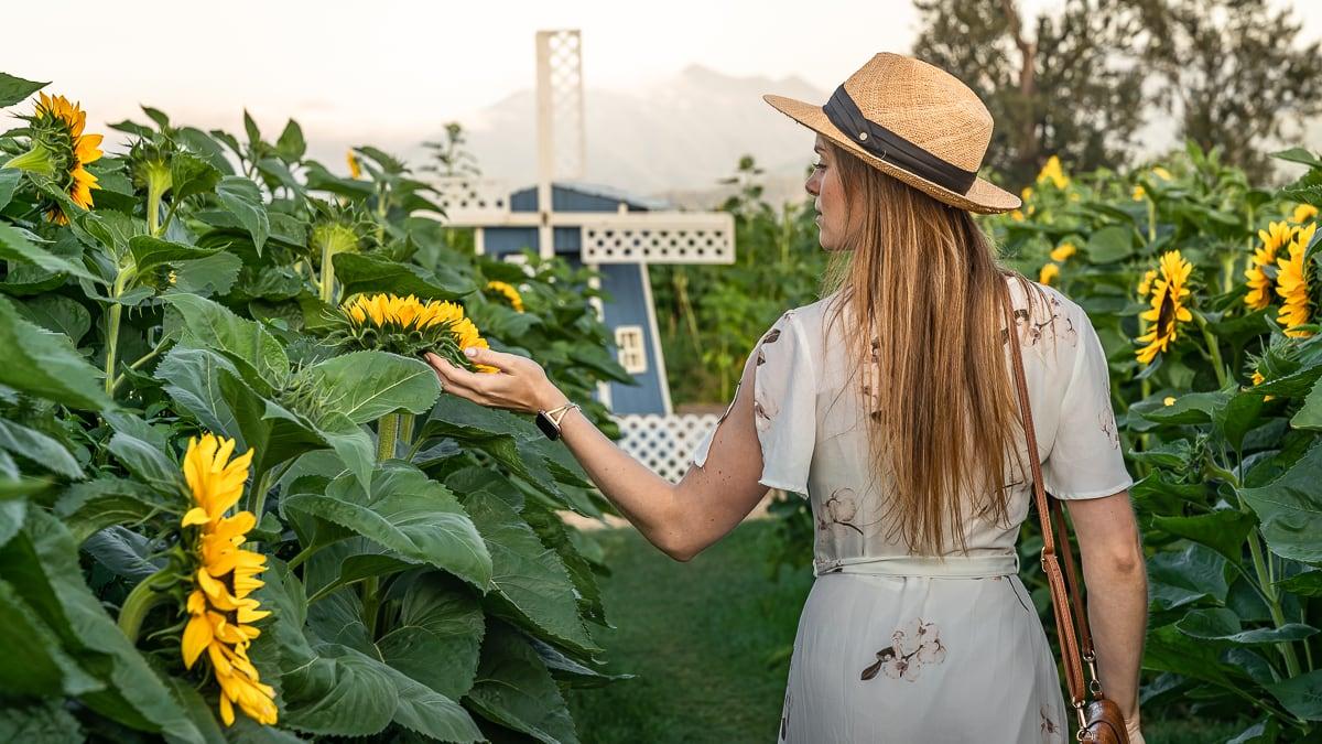 Strolling around Sunflower Field