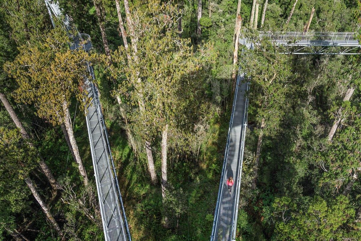 West Coast Treetop walk NZ