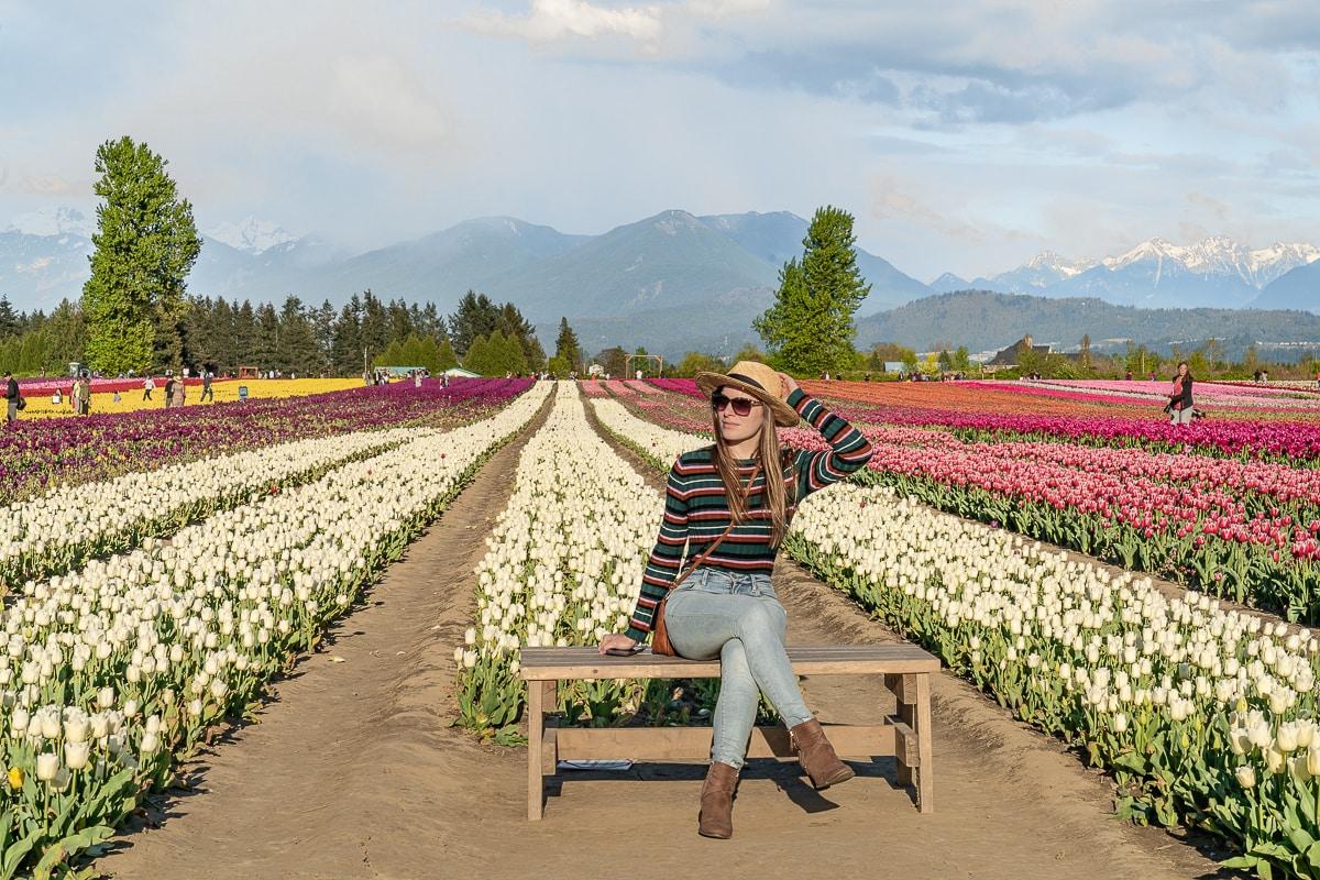 bc chilliwack tulip festival