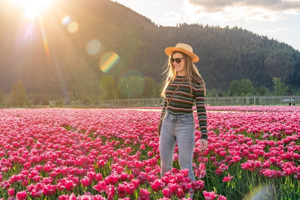 Wander the tulip fields in Chilliwack: Tulips of the Valley
