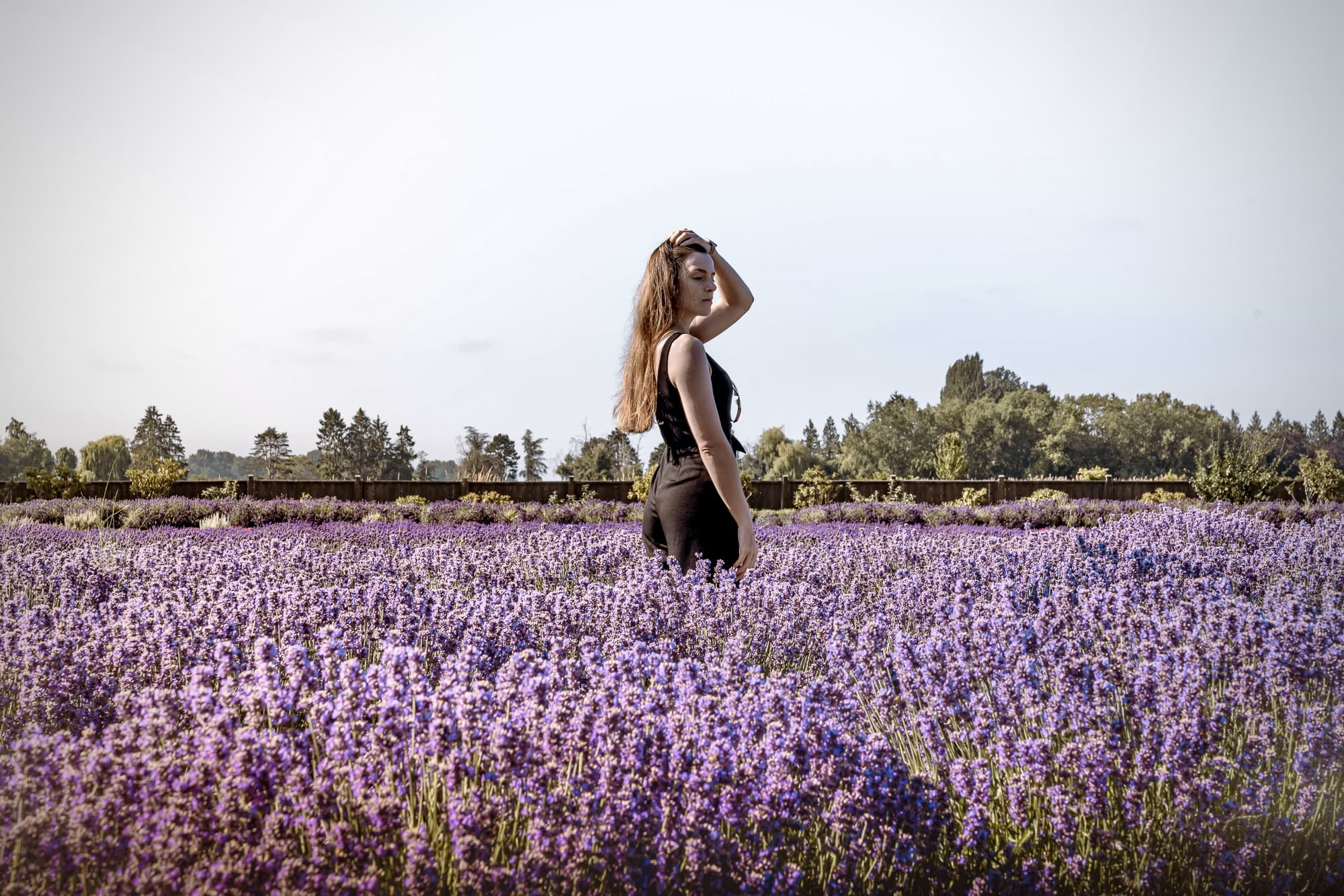 lavender field photography