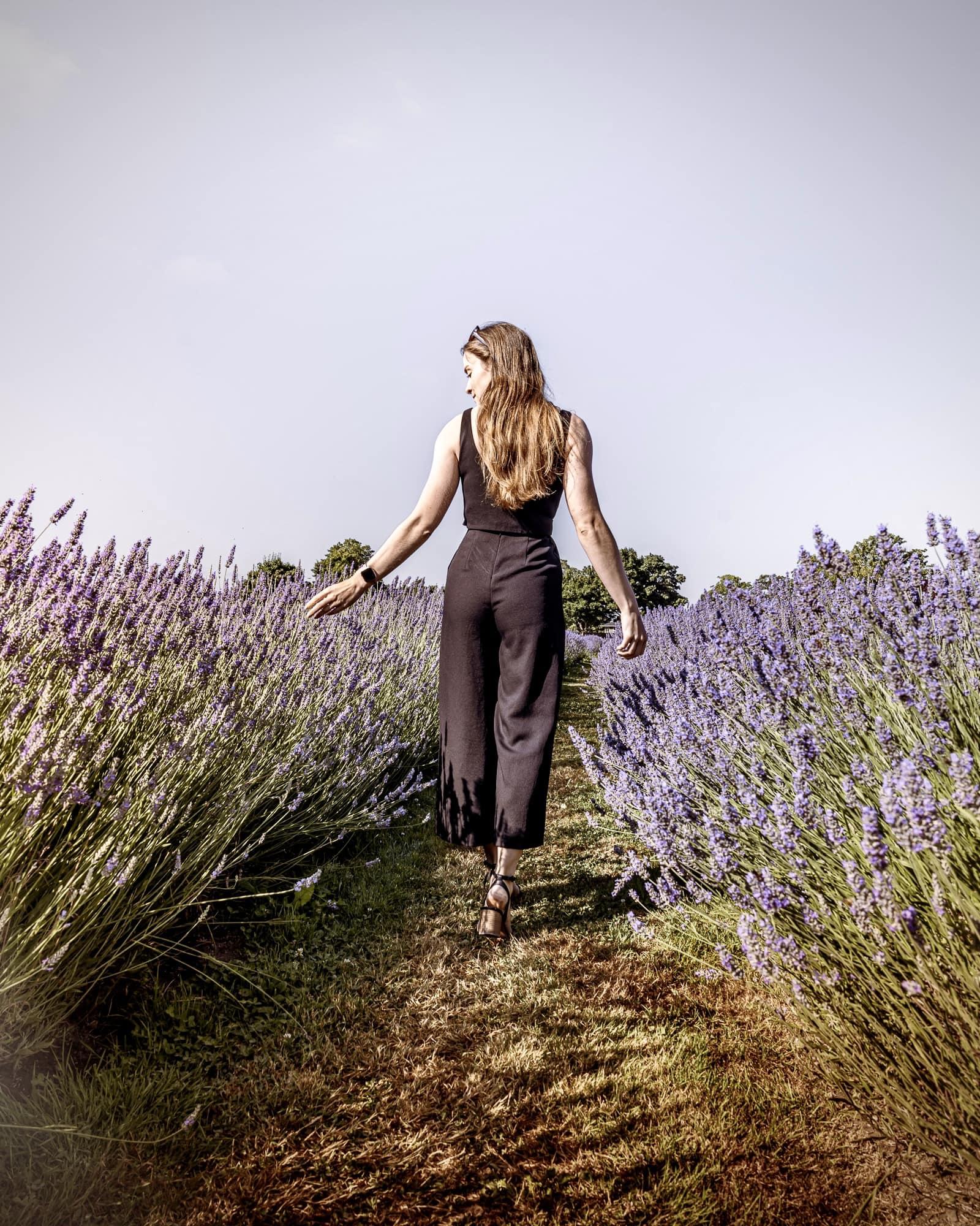 lavender fields canada
