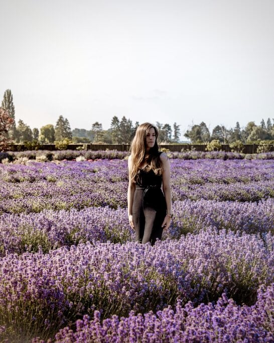 lavender photography canada