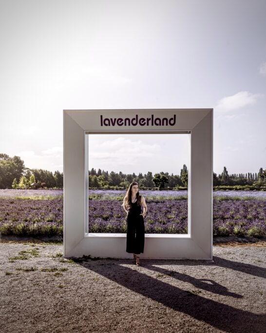 lavenderland BC lavender farm