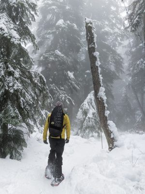 Snowshoeing Cypress in the fog